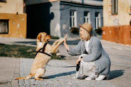 Quelle activité pratiquer avec son chien ?